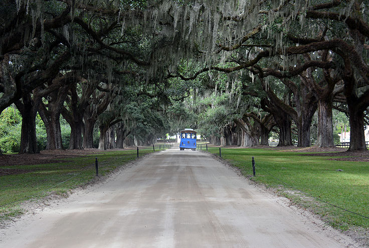 The famous live oaks at Boone Hall Plantation, Mt. Pleasant, SC