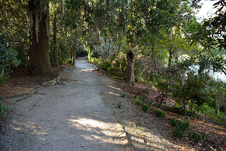 A walking path at Magnolia Plantation in Charleston, SC