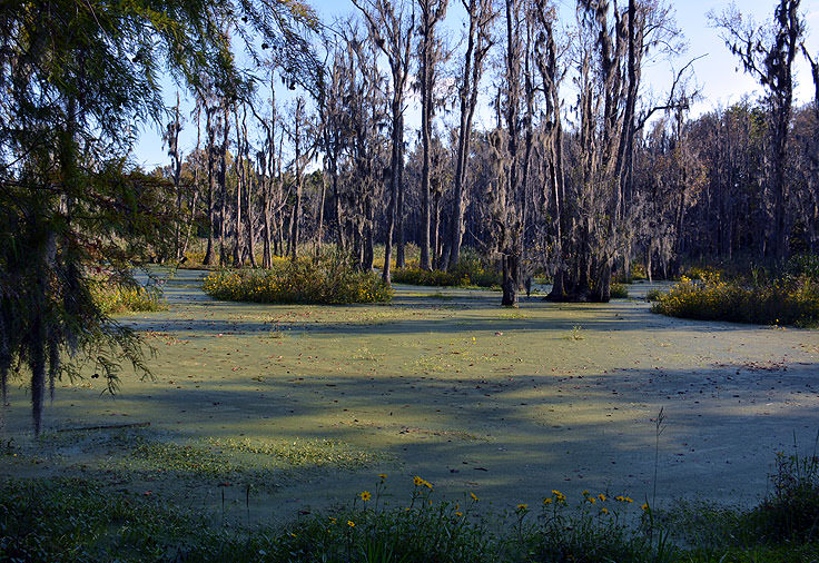 The Audobon Swamp Garden at Magnolia Plantation in Charleston, SC