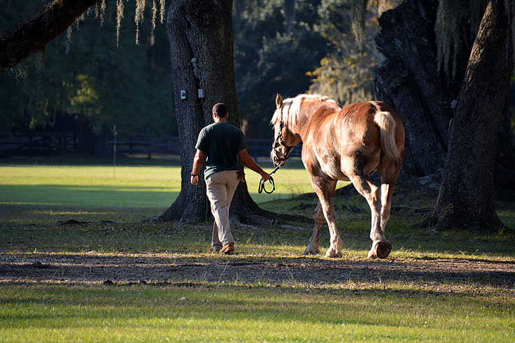 A horse at Middleton Place Plantation in Charleston, SC